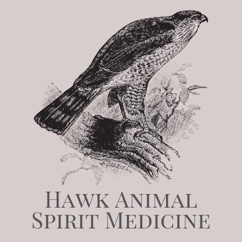 Hawk Animal Spirit Medicine Logo