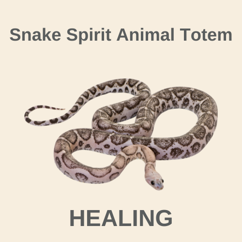 What does the Snake Spirit Animal Totem Mean?