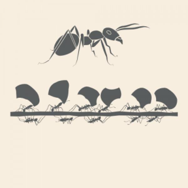 Ant Spirit Animal Totem