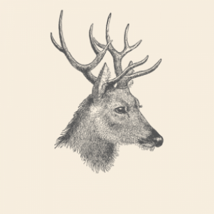 Deer Animal Spirit Medicine Logo No Lettering